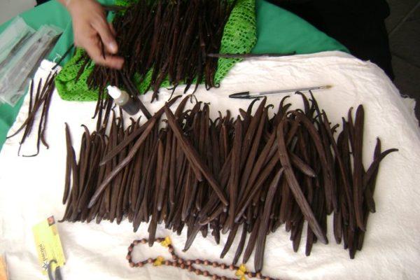 Vanilla Beans 100 % Natural