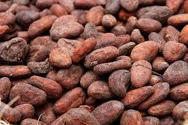 Cacao-Bean-Mexican-Slow-Food-Products.jpg