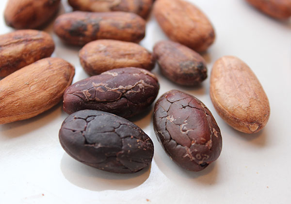 cacao recipes cacao beans - 7 SUN'S PINOLE POWDER POWER (click image to view)