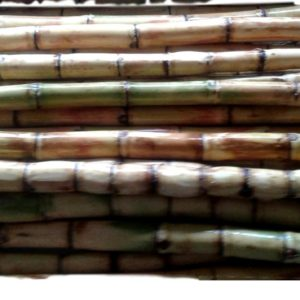 Sugarcane Stalks
